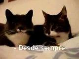 Re: Cat Talking, Translation (legendas português)