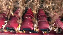Farm Basics - Corn Growth Stages #737 (Air Date 5/20/12)