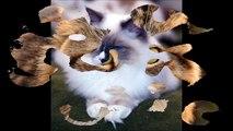Cat: Animals for Children Kids Videos Kindergarten Preschool Learning Toddlers Sounds Songs Farm