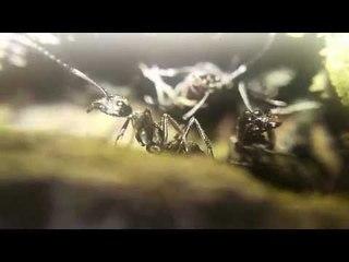 THE ADVENTURE OF THE ANT | Cuộc phiêu lưu của những chú kiến