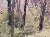 Kansas City Skunk Ape Sighting...