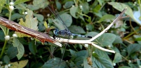 Amazing Beautiful & Coloful DragonFly Bird - Birds Planet - Nature Documentary HD