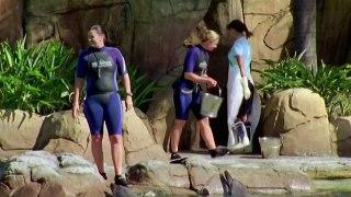 H2O just add water Season 1 Episode 4 Party Girls short epis