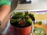 planta carnivora comiendo mosca