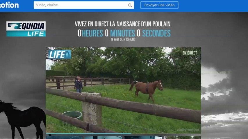 Naissance D'un Poulain En Direct | EQUIDIA - Case Study