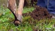 Querbeet-Garten: Kompost Folge 1 | Querbeet | BR - Bayerisches Fernsehen