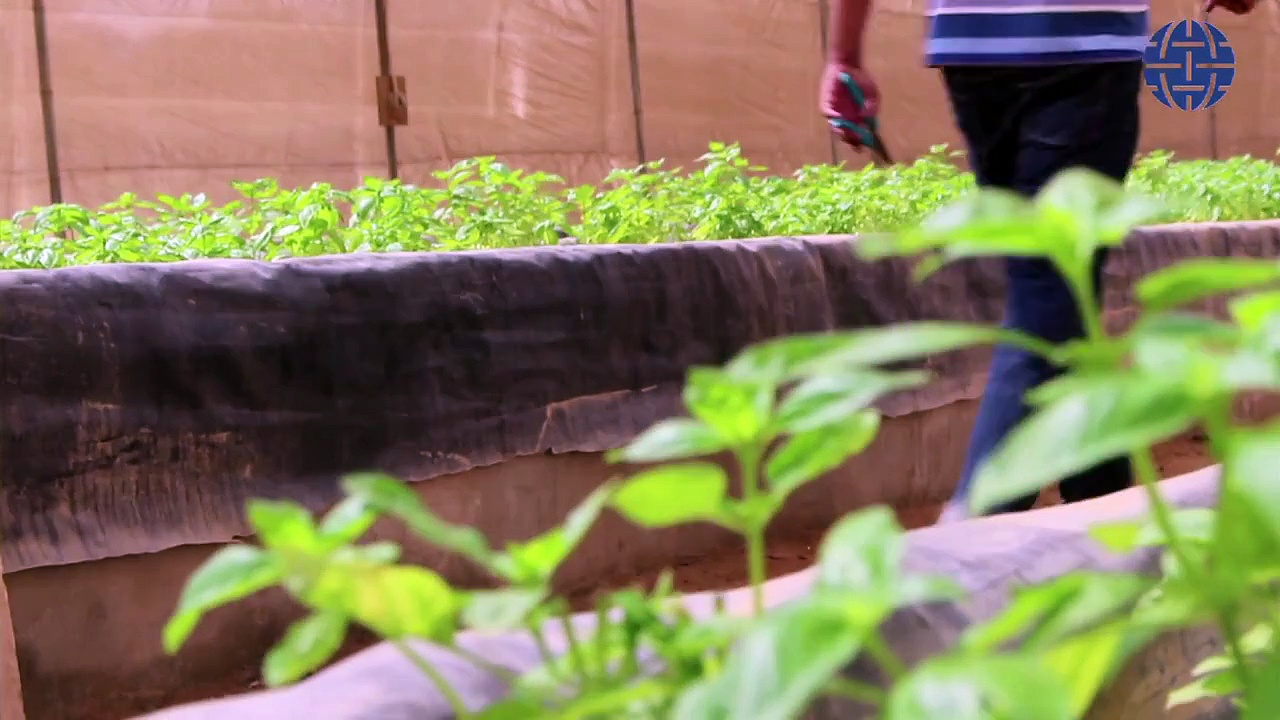 EgyptSource on Egypt's First Aquaponics Farm