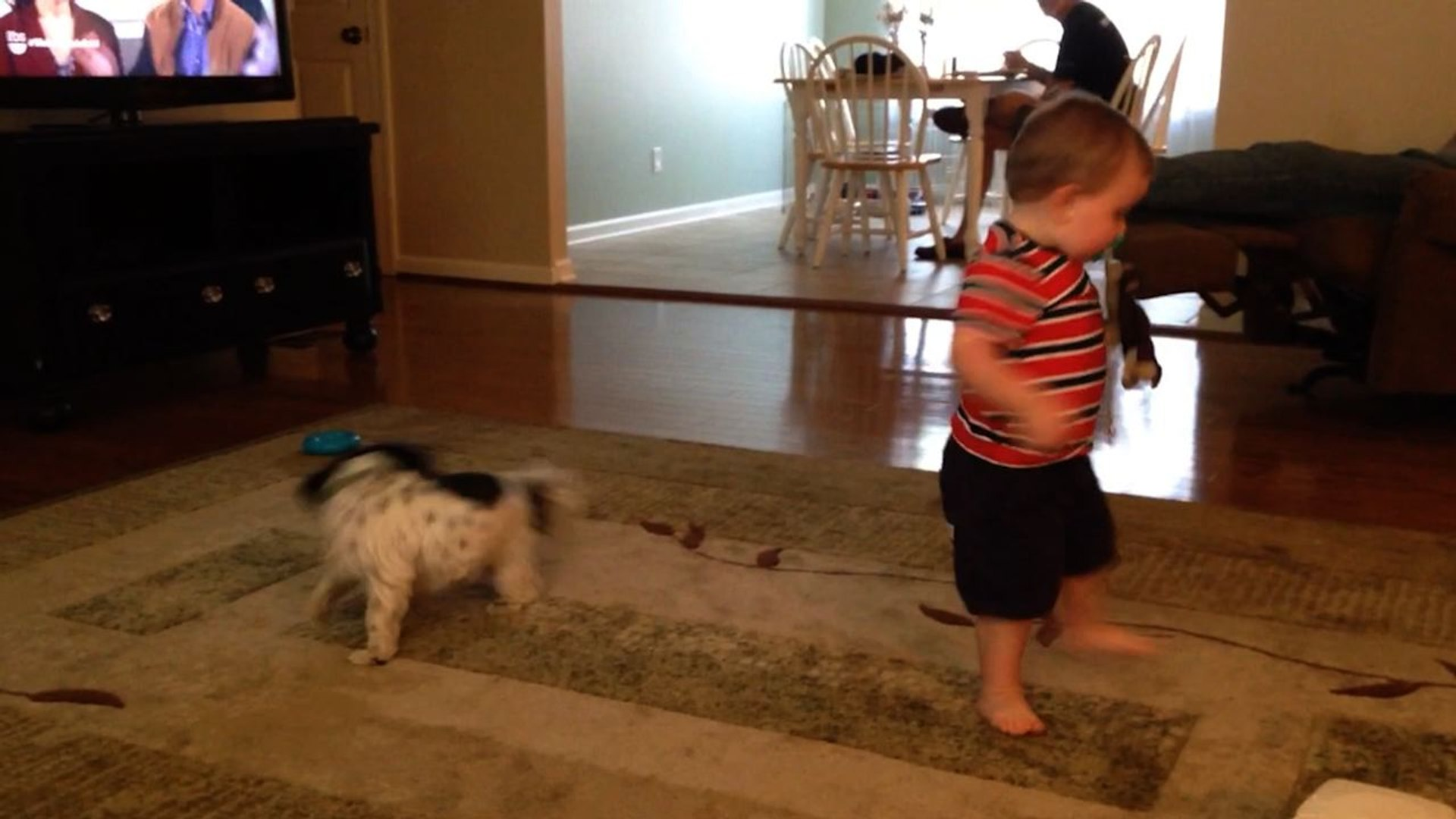 Toddler And Dog Both Chase Their Tails