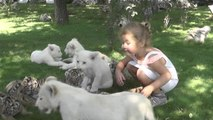 Children Get to Play with White Lion and Siberian Tiger Cubs