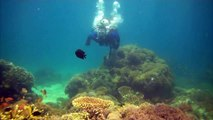 Science Today: Saving Coral Reefs | California Academy of Sciences