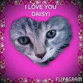 I love Daisy you to see how much she weighs now