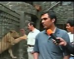 TV NEWS REPORTER GETS ATTACKED BY LION 2014 lion attack - lion attack human - lion attacks