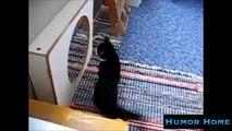 Animal Humour Compilation Funny Animals