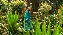 Dança Nepalesa, Meninas dos olhos de Deus.