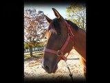 My Horse Is.. ♥ (A tribute to my lease horse)