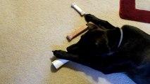 What type of  Dog bone does your dog like? - The Lighthouse Lady