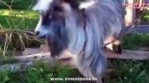 Greatest animal VINE compilation of cats and dog november 2013!   Vines   best cat vines compilation