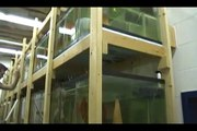 Fish house tour part 2 Discus Hans USA Baltimore Importer of Stendker Discus ~ Germany