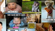 Funny Cats Funny Cat Videos Funny Animal Videos Funny Dog Funny Dogs and Cats