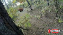Extreme animal attacks on humans   When Crazy Animals Attack   wild animal attack videos