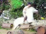 *_* galloping horses on the beach and showjumping pony jumping 3ft4 ** 112cm zebbadie *_*