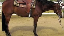 Makin Easy  Money Derby Aged Reining Horse For Sale by Steve Wolfe Performance Horses
