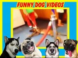 funny dog videos - cute dog videos - dog videos - funny videos of dogs