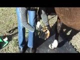 Horse Boots - Cavallo Sport Hoof Boot Fitting