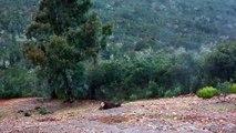 Monteria Calle Alwén Drivenhunt Reddeer Wildboar Mouflon Hunt Hunting Jakt Spain
