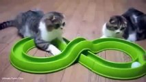 [CAT] Funny Cats-Kitty-Fun-Animals-Baby Cute-Best-Meow-Kitten New 2015-Pet