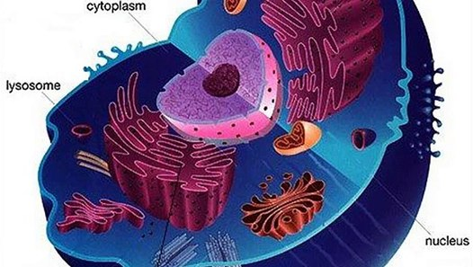 parts of an animal cell ks3 - video dailymotion