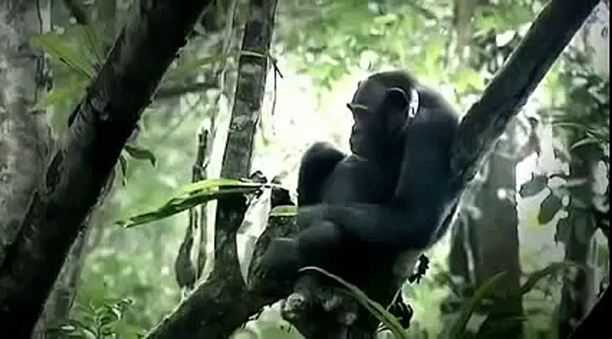[Nature Documentary] A Chimpanzee's Tale - NEW+ Full Animal Documentary