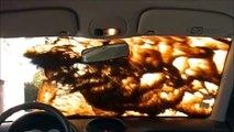 Traitement carrosserie vitres jantes automobile nano protection