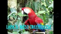 Treehouses in Costa Rica,  Costa Rica Tree Houses, Tree Houses vs Hotels - 3 Nights -$950