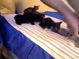 ►►►Kittens Kitten Bengal Siamese Calico Magic!!! $100