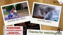 Funny Videos   Funny Animal   Best Funny Animals compilation 2015 | funny pets | funny pets videos