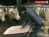 Bâtiment pour bovins : une fosse sous caillebotis pour gérer les effluents