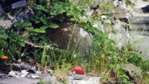 Pokemon Go Coming to iPhone & Android Next Year - News Update