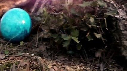 El secreto del huevo azul (Premio El Barco de Vapor 2012)