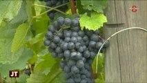 Vins de Savoie : Découverte de la Biodynamie viticole