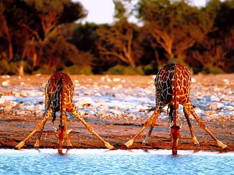 African Animals To Kids