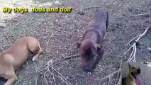Top Funny Dogs Compilation 2014 Dods and Dolf