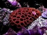 Musicvideo mit Korallen und Krebsen