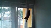 Katze schleicht sich durchs gekippte Fenster auf dem Balkon - crazy cat
