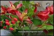 Mini-curso arranjos florais - TV Gazeta - 28/04/2010 - 2a. parte