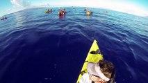 Kayak Maui Whale Watch | Aloha Kayak Maui