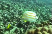 Scuba Diving Maui, Hawaii Checkout Dive Kahikili Park Airport Beach Maui Feb 2010