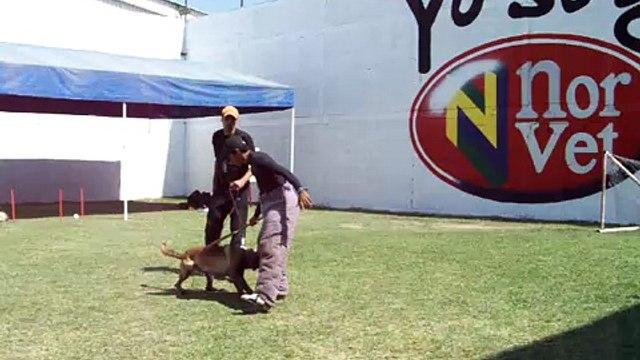 RUTINA DE PROTECCION CON CRONOS