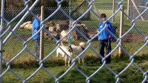 Hetty epilepsy alert seizure dog & merlin autism assistance dog animal saints  and sinners
