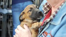 46 dogs and puppies saved at Northeast Animal Shelter!